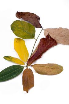 Free Autumn Leaves On White Stock Image - 6848141