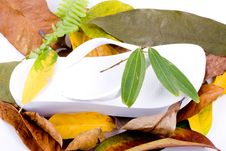 Free Autumn Leaves On White Royalty Free Stock Photography - 6848147