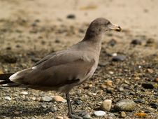 Free Seagull On Beach Royalty Free Stock Photos - 6849078