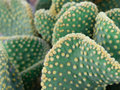 Free Cactus Royalty Free Stock Images - 6859759