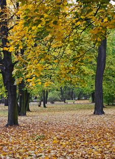 Free Autumn Stock Photography - 6851712