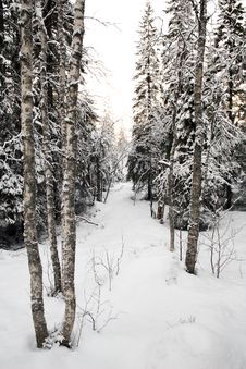 Free Scenery In Winter Stock Images - 6852154