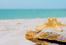 Free Starfish On A Ston Royalty Free Stock Images - 6852989