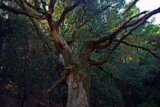 Free Tree Stock Photos - 6853023