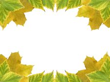 Free Leaves Frame Stock Photography - 6853792