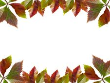 Free Frame Of Autumn Leaves Royalty Free Stock Photography - 6854077