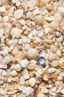 Free Sea Shells Royalty Free Stock Photography - 6854127
