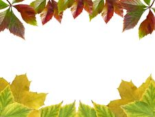 Free Leaves Frame Stock Image - 6855311