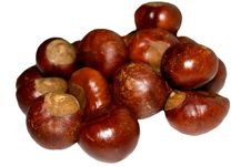Free Chestnuts Stock Image - 6856301