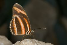Free Butterfly Stock Images - 6856334