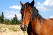 Free Horse Stock Images - 6856494