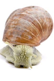 Free Little Snail Stock Images - 6857304