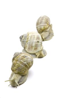 Free Three Snails Stock Photography - 6857332