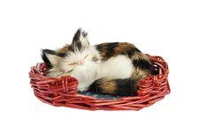 Free Small Cat Stock Photos - 6857783