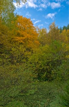 Free Autumn Colors. Swamp Royalty Free Stock Photography - 6857977