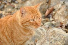 Free Cat Royalty Free Stock Photo - 6858665