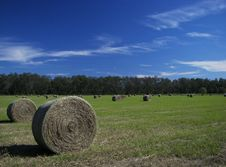 Free Fall Hay Color 2 Stock Images - 6859784