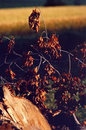 Free Autumn Colours Royalty Free Stock Photography - 6860597