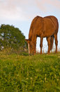 Free Horse Royalty Free Stock Photography - 6867057