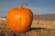 Free Pumpkin Royalty Free Stock Photo - 6860035
