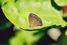 Free Tiny Butterfly On A Leaf Royalty Free Stock Photos - 6860898