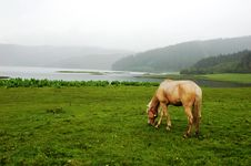 Free Meadows With Horse Royalty Free Stock Photo - 6861225
