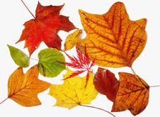 Free Autumn Leaves Stock Photos - 6861243