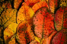 Free Autumn Leaves Royalty Free Stock Images - 6861549
