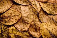 Free Autumn Leaves Royalty Free Stock Photos - 6861558