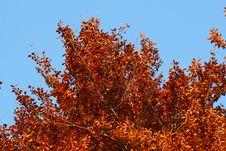 Free Autumn Tree Royalty Free Stock Photo - 6862475