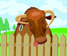 Free Bull In The Garden Stock Images - 6862564
