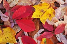 Free Autumn Color Leaf Royalty Free Stock Images - 6863149