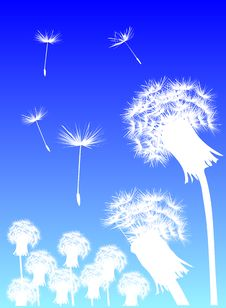 Free White Dandelions And Blue Sky Stock Photos - 6863373