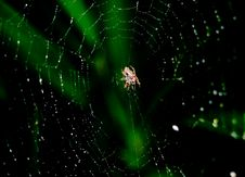 Spider In The Web Stock Image