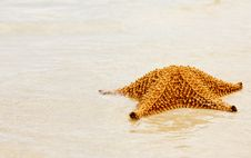 Free Starfish Stock Photography - 6864652
