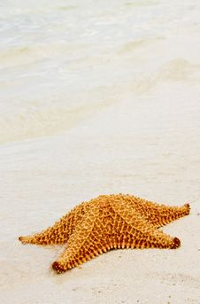 Free Starfish Stock Images - 6864664