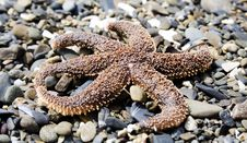 Free Starfish Stock Images - 6864794