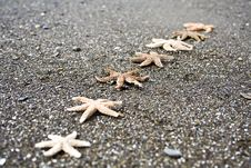 Free Starfish Royalty Free Stock Photo - 6864805