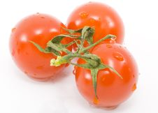 Free Tomatoes Stock Image - 6866231