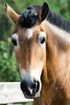 Free Portrait Of A Horse Stock Photo - 6866330