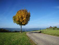 Free Tree In Fall Stock Image - 6866701