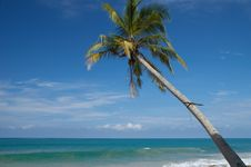 Free TROPICAL PARADISE Stock Photos - 6867003