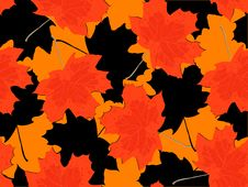 Free Leaf Fall Royalty Free Stock Image - 6867246