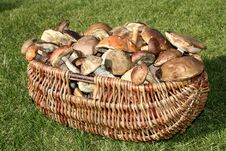 Free Wild Mushrooms Basket Stock Photos - 6867443