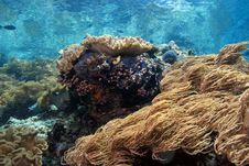 Free Indonesian Coral Reef Stock Photography - 6868972