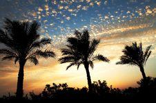Free Palms Scenery Stock Photos - 6869103