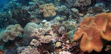 Free Indonesian Coral Reef Stock Photography - 6869192