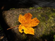 Free The Leaf Royalty Free Stock Images - 6869359