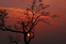 Free Silhouetted Tree & Himalayan Sunset India Stock Photos - 6869513
