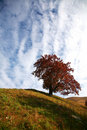 Free Autumn Tree Stock Photography - 6877552